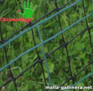 Malla gallinera chickenmalla instalada en gallinero