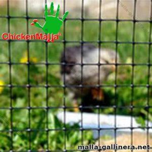 Malla plástica chickenmalla instalada en un corral